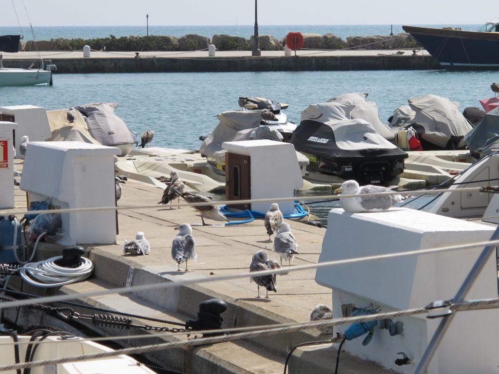 Disse naboene kunne ikke tenke seg på hjelpe til med rengjøring. De synes det er mye mer morsomt å grise ned båten med måkebæsj.
