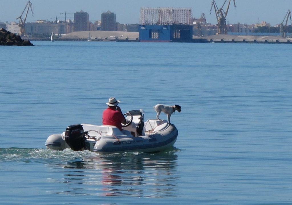 Det er noen som har hunder som faktisk egner seg til å være skipshund. Denne spaserte rundt på jolla uten å miste balanse en eneste gang.