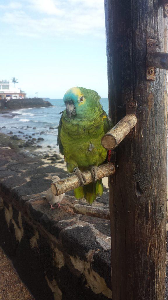 Denne papegøyen ble fotografert og kikket på hele tiden. Særlig barna var opptatt av den. Men den tillot ikke at de tok på den.