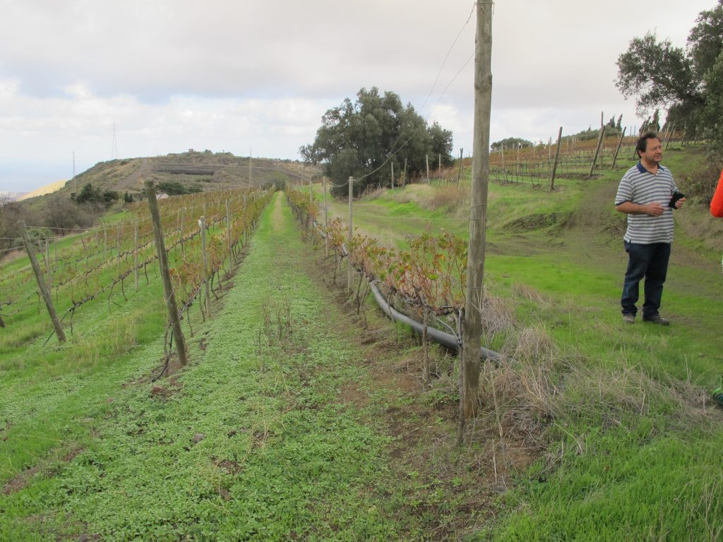 Eieren peker og forklarer. Han var flink til å forklare oss hvordan prosessene med å lage vin er.