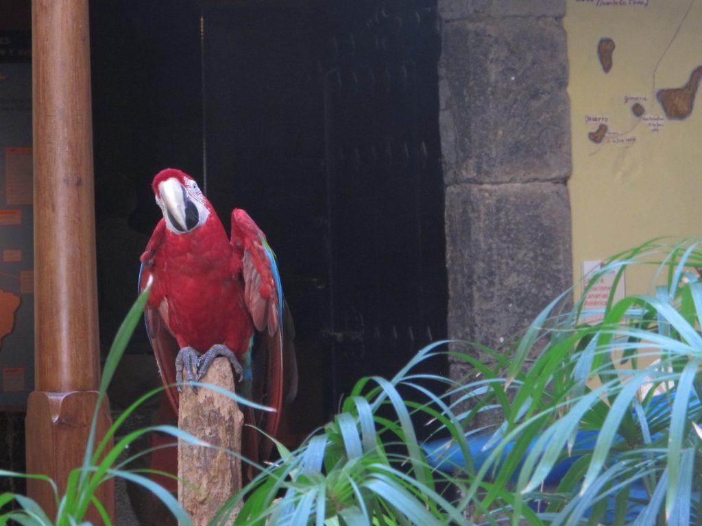 Denne papegøyen og kameraten dens ønsket oss velkommen til huset. Men øredøvende skrik.