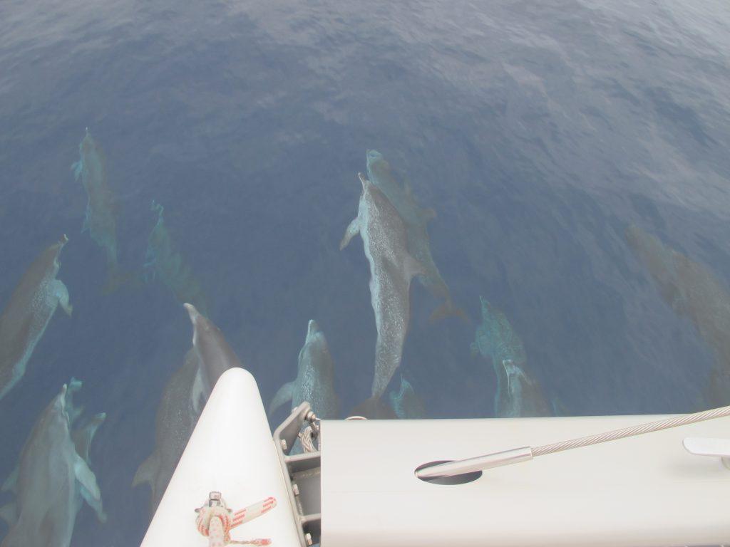 Våre favoritt havdyr har kommet på besøk igjen.