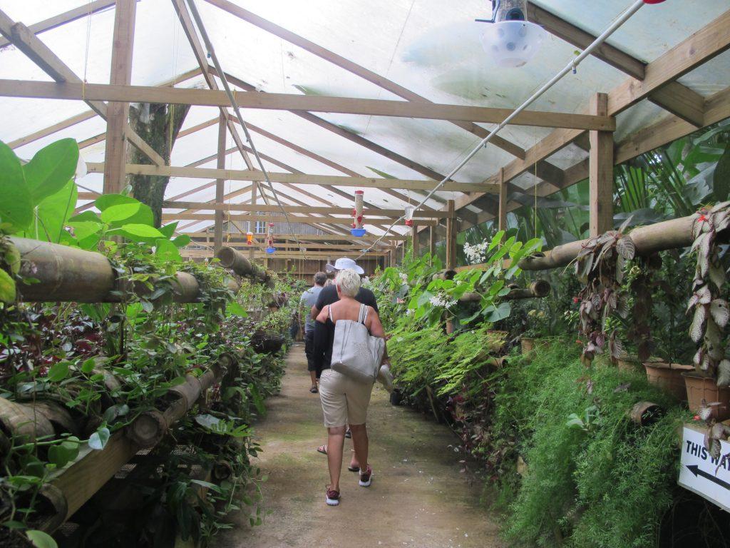 På tur i veksthuset. Skjønner egentlig ikke hvorfor de må ha et veksthus. Hele St.Lucia er jo et veksthus. Fantastisk frodig.