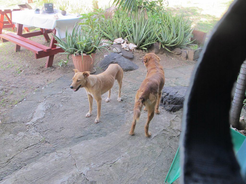 Ida fikk seg en ny bestevenn. Hunden til venstre fulgte etter oss helt fra kirken. Og den var veldig glad i å kose.