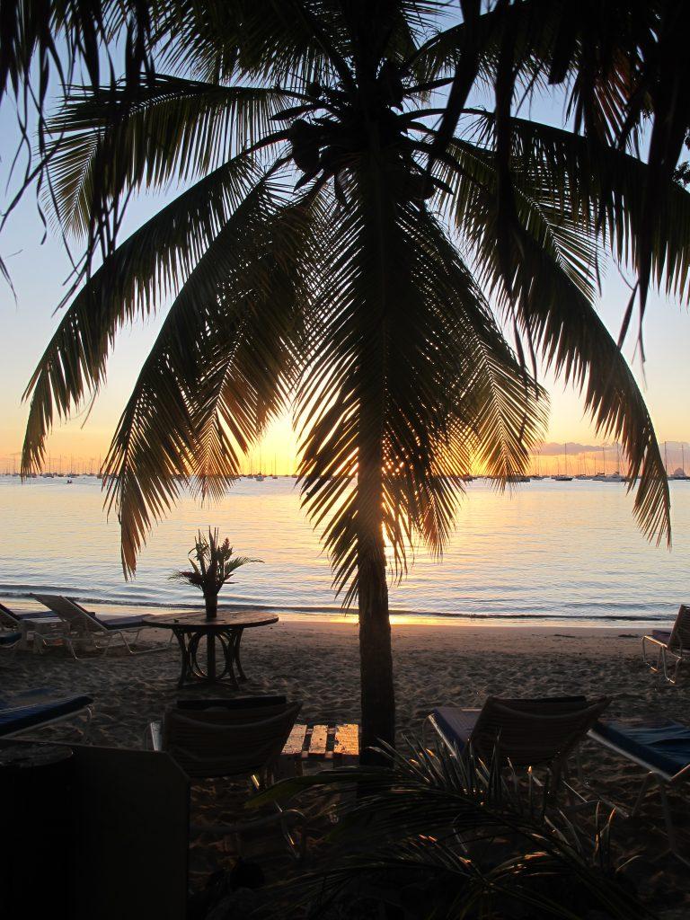 Det er noe med palmer som er så usannsynlig vakkert.