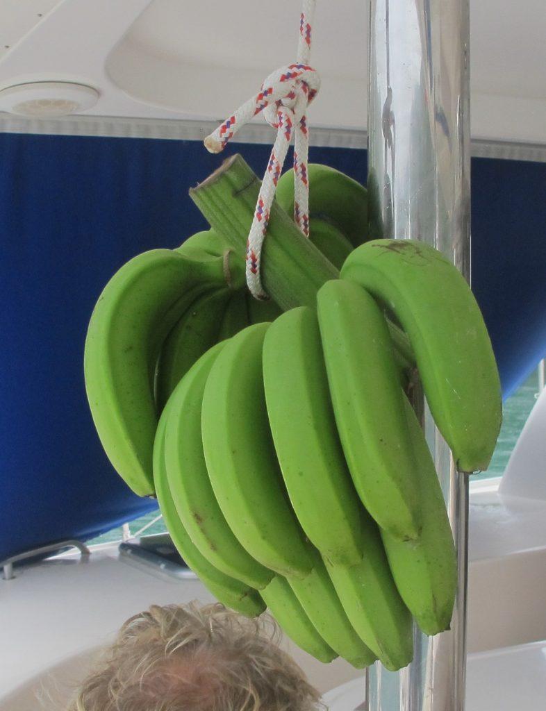 En diger klase med grønne bananer kjøpte vi i dag. Forhåpentligvis blir de gule med tid og stunder.